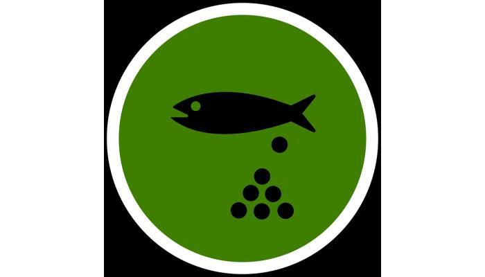 Нерестовый запрет на ловлю рыбы в Украине 2020